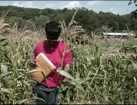 Agricultural Scientist 11